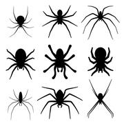 Set of spider silhouette vector icon. Top view Stock Illustration