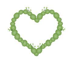 Fresh Asiatic Pennywort in Beautiful Heart Shape - stock illustration
