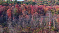Slow flight over trees in blazing red foliage - stock footage
