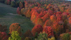 Low flight over woodland ablaze with fall colors - stock footage