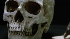 Stock Video Footage of Caveman Skull - Australopithecus and Evolution