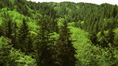 Low, fast flight over green forest Stock Footage
