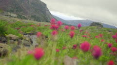 Close up of beautiful mountain wild flowers Stock Footage