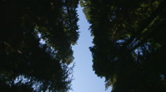 Reflection Plate of a Driving Plate: Car travels east on the Redwood Highway - stock footage