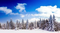 Winter landscape with high spruces and snow in mountains - stock footage