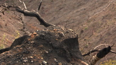From close-up of charred stump to wide view of clearcut canyon Stock Footage