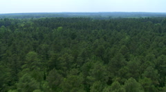 Low flight over forest in multiple stages of growth Stock Footage