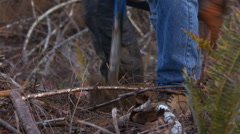 Close-up of worker planting a seedling tree in a clearcut area Stock Footage