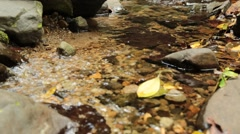Clear shallow creek flowing Stock Footage