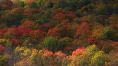 Time-lapse cloud shadows on wooded hillside in vivid autumn colors Stock Footage