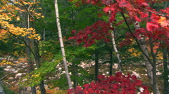 Richly colored fall foliage partially screening a shallow, boulder-strewn stream Stock Footage