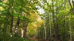 Shade-dappled lane bordered by yellow-green alders in early autumn Stock Footage