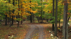 Winding lane through yellowing foliage of a hardwood forest in autumn - stock footage