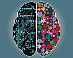 Left and right side of the brain, logic and creativity, vector Stock Illustration