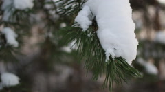 Close up of fir tree branch under snow Stock Footage