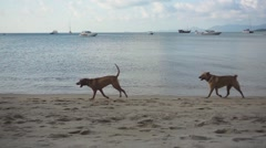 Dogs Running Along a Beach. Slow Motion Stock Footage