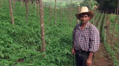 Salvadoran farmer posing near rows of staked tomatoes Stock Footage