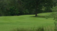 Zoom-out from shady tree to reed-encircled water hazard on golf course Stock Footage