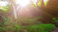 Pulsing sunlight ray in lush Forest Scenic Stock Footage