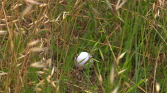 Close-up of golf ball lying in weeds and dry grass Stock Footage