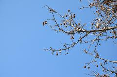 Bare Tree Branches and Winter Sky - stock photo