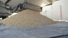 Corn being unloaded into a distillery for fermenting and making bourbon whiskey Stock Footage