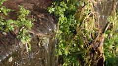 Stock Video Footage of Beautiful small pure fresh water waterfall.