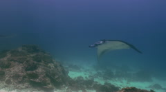 Giant Mantas Ray swim in blue sea search of food. - stock footage