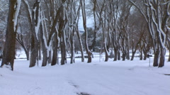 Snow-covered leafless trees lining a woodland drive in winter Stock Footage