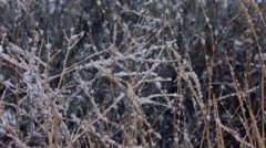 Ice crystals on dried weeds in falling snow Stock Footage