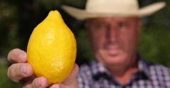 Agriculturist Recommend Yellow Exotic Citrus Fruit Ripe Refreshing Juicy Lemon Stock Footage