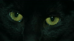Black Cat Yellow Eyes Close Up. - stock footage