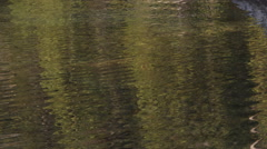 Rippling water distorting tree reflections into an abstract pattern Stock Footage
