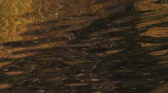 Rippling water and distorted golden brown reflections - stock footage