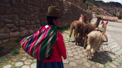 Rear view of Peruvian woman driving llamas along a street in Cusco - stock footage