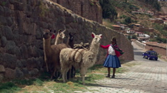 Woman with llamas walking toward camera on a steep street in Cusco, Peru Stock Footage