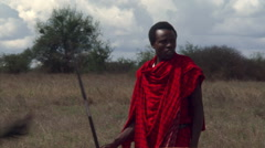 Masai herdsman with spear driving cattle across dry pastureland - stock footage