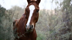 Brown wild horse Stock Footage