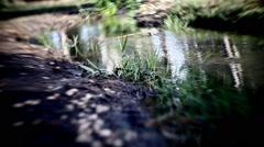 wild nature lake - stock footage