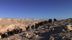 A herd of goats and their herder on a steep, rocky hillside in Jordanian desert Stock Footage