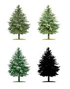 Tree in four different illustration techniques - Pine-tree Stock Illustration