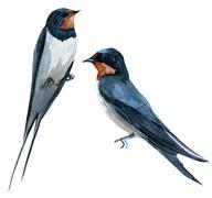 Watercolor raster swallow bird Stock Illustration