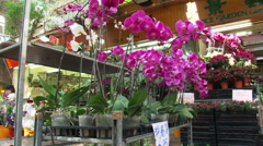 Hong Kong: Tilt-down from orchids to woman preparing plants in nursery Stock Footage