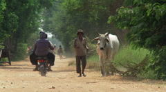 Cambodia: Man walking with Zebu steers and people riding bikes on a dirt road Stock Footage