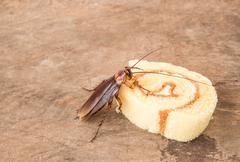 Cockroach eating a bread - stock photo