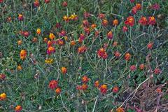 Wilted red flowers in a flowerbed Stock Photos