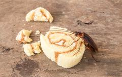 Stock Photo of Cockroach eating a bread