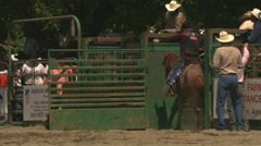 Rodeo bucking horse throwing rider near chute gate, bucking close to camera Stock Footage