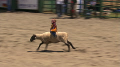 Little boy riding a running sheep in a kids' event at a rodeo - stock footage