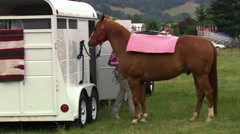 Girl saddling a horse tied to a horse trailer - stock footage